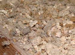 Asbestos Public Health Statement